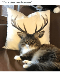 Af, Cats, and Deer: 95  I'ma deer now hooman I hate cats but this guy is majestic AF