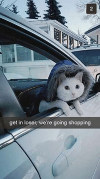 Get In Loser: get in loser, we're going shopping