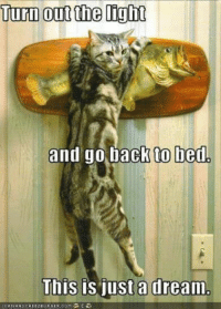 A Dream, Grumpy Cat, and Dreams: Turn out the light  and go back to bed  This is just a dream  CAN HAS CHEEZEURGER. GoM