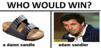 WHO WOULD WIN?  STARECAT COM  a damn sandle  adam sandler whos winning