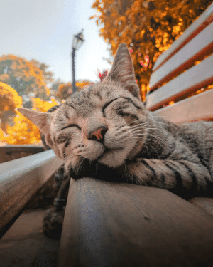This cat was sleeping on the Bench and People were kind enough to not sit there and let her sleep.: 98 This cat was sleeping on the Bench and People were kind enough to not sit there and let her sleep.