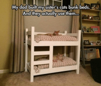 cat bunk beds