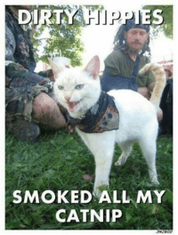 Dirty Memes: DIRTY HIPPIES  SMOKED ALL MY  CATNIP