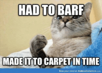 Grumpy Cat, Time, and Mind: HAD TO BARF  MADE IT TO IN TIME  Blow your mind at FUNsubstance.com