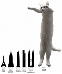 tl;dr: 984 ft.  1,250 ft.  1,381 ft. 1,450 ft  1,483 ft  Eiffel  Jin Mao  Tower  State  Paris  New York  Building  Tower  Towers  Building Shanghai Chicago  1 & 2  Kuala Lumpur  10,000 ft  Longcat  nternet tl;dr