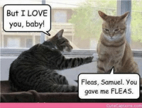 Baby, It's Cold Outside, Love, and Grumpy Cat: But I LOVE  you, baby!  Fleas, Samuel. You  gave me FLEAS.  Gute Captions co