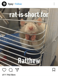 "9gag, Death, and Http: 9g  ag Follow  rat is short for  Ratthew  411264 likes <p>9Gag hug of death, sell! via /r/MemeEconomy <a href=""http://ift.tt/2BiAYH7"">http://ift.tt/2BiAYH7</a></p>"