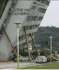 Dogs, Memes, and Anxiety: 9g0Ne  Anxiety and  depression  Dogs  Dogs  Dogs  SP  Me https://t.co/gjFhFpmnAj