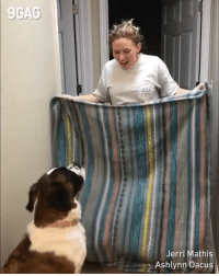 9gag, Memes, and Magic: 9GAC  Jerri Mathis  Ashlynn Dacus This poor dog is never gonna watch another magic trick. - By Jerri Mathis & Ashlynn Dacus - whatthefluffchallenge whatthefluffchallengefail 9gag