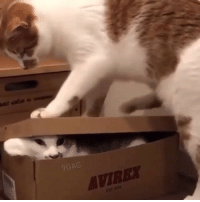 9gag, Cute, and Memes: 9GAG  AVIREY When your luggage is too full. - Watch more cute cat videos on @meowed