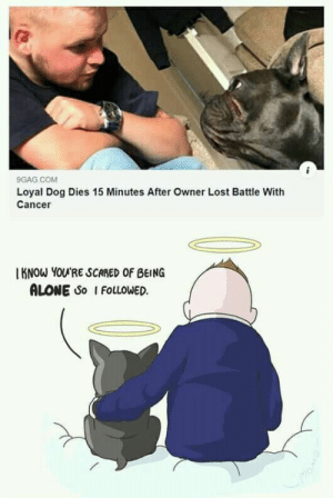 This saddens me so much, but I'm glad he's not alone.: 9GAG COM  Loyal Dog Dies 15 Minutes After Owner Lost Battle With  Cancer  KNOW YOU'RE SCARED OF BEING  ALONE So I FOLLOWED This saddens me so much, but I'm glad he's not alone.