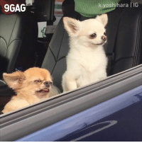 9gag, Dank, and 🤖: 9GAG  yoshihara IG There are 2 types of people in the morning  📹 k.yoshihara | IG