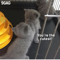9gag, Cute, and Memes: 9GAG  You're the  cutest! When you compliment your friend and they compliment you back⠀ @meowed cat bff cute 9gag