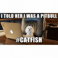 Catfished, Crazy, and Funny: I TOLD HERI WAS A PITBULL  Have you ever been catfished? We're recruiting the best catfish stories for the MTV show @mtvcatfishcasting and we want to hear your crazy stories! Apply HERE: www.betches.co-catfish 🐱🐠Also LINK IN BIO