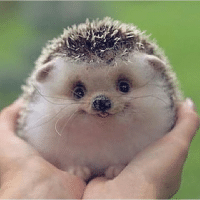 Happy Hedgehog😍-Follow @awesomedreamplaces for more incredible nature and travel photographs @awesomedreamplaces-Tag your best friends below😍👇🏻: Happy Hedgehog😍-Follow @awesomedreamplaces for more incredible nature and travel photographs @awesomedreamplaces-Tag your best friends below😍👇🏻