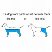 ⠀: If a dog wore pants would he wear them  like this  like this?  or ⠀