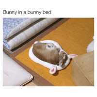 Bunny in a bunny bed Goodnight. (@davie_dave)