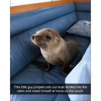 What kind of dog is this?: This little guy jumped onto our boat strolled into the  cabin and made himself at home on the couch. What kind of dog is this?