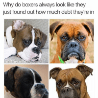 Bitch, Boxer, and Girl Memes: Why do boxers always look like they  just found out how much debt they're in  Shitheadste Literal resting bitch face (@shitheadsteve)