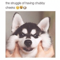 TAG them whose cheeks you wanna pull 😝😘💕: the struggle of having chubby  cheeks TAG them whose cheeks you wanna pull 😝😘💕