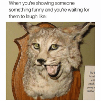 😃..huh..😃..funny right?..😃..well fuck you then Felipe😒😒 fabsquad ithoughtitwasfunny byefelipe: When you're showing someone  something funny and you're waiting for  them to laugh like:  The  its tai  In t  attack  young  mother 😃..huh..😃..funny right?..😃..well fuck you then Felipe😒😒 fabsquad ithoughtitwasfunny byefelipe