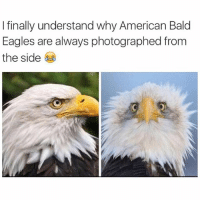 Finals, Funny, and American: I finally understand why American Bald  Eagles are always photographed from  the side
