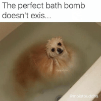 Pro tip: cute animal memes and unicorn emojis are the easiest way to get likes 🦄: The perfect bath bomb doesn't exis... Pro tip: cute animal memes and unicorn emojis are the easiest way to get likes 🦄