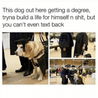 Dogs, Funny, and Life: This dog out here getting a degree,  tryna build a life for himself n shit, but  you can't even text back Get your shit together @andrewbanks6197