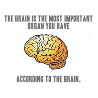 Well played indeed 💡: THE BRAIN IS THE MOST IMPORTANT  ORGAN YOU HAVE  ACCORDING TO THE BRAIN. Well played indeed 💡