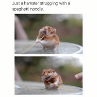 Spaghetti Meme: Just a hamster struggling with a  spaghetti noodle.