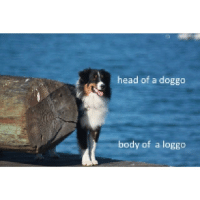 Doggos: head of a doggo  body of a loggo