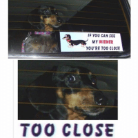 slow ya roll bro (tumblr: for-good-health): A IF YOU CAN SEE  My WIENER  YOU'RE TOO CLOSE  TOO CLOSE slow ya roll bro (tumblr: for-good-health)