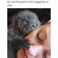 Otter Meme: My new life goal is to be hugged by an  otter.