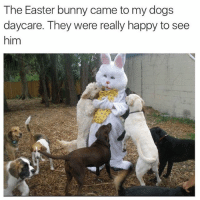 Bunnies, Dogs, and Easter: The Easter bunny came to my dogs  daycare. They were really happy to see  him Adorbs. (Twitter: allygondeck)