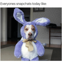 Everyones snapchats today like: These snapchat filters are getting good🐶🐰-Bunny-pup via @maymothedog 🐶💞-happyeaster2016 snapsonsnaps