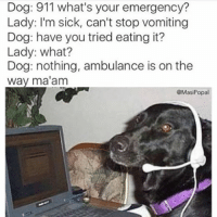 Dog: 911 what's your emergency?  Lady: I'm sick, can't stop vomiting  Dog: have you tried eating it?  Lady: what?  Dog: nothing, ambulance is on the  way ma'am  @Masi Popal who's a good boy (@masipopal)