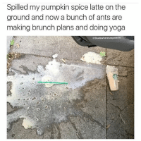 So basic (@dudewheresmymeme): Spilled my pumpkin spice latte onthe  ground and now a bunch of ants are  making brunch plans and doing yoga  @Dude where smymeme So basic (@dudewheresmymeme)