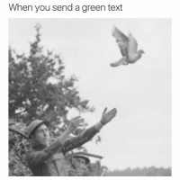 I actually trust the pigeon more: When you send a green text I actually trust the pigeon more