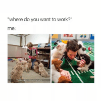 """""""where do you want to work?""""  me  Therapy dogs in training being read to You don't gotta go to work work work work work"""