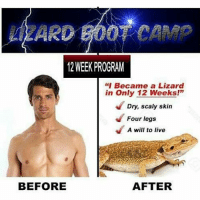 """lizard: WEEK PROGRAM  """"I Became a Lizard  in only 12 Weeks!""""  Dry, scaly skin  Four legs  A will to live  BEFORE  AFTER"""