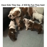Dont listen to they,they dont want you to succeed 😂FollowMeForFunnyStuff HoodClips -nochill: Have Kids They Say...it Will Be Fun They Said  Hoodclips.com Dont listen to they,they dont want you to succeed 😂FollowMeForFunnyStuff HoodClips -nochill