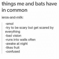 I think I'm a bat ¿ •ë•: things me and bats have  In Common  ieros-and-milk:  -smol  -try to be scary but get scared by  everything  -bad vision  -runs into walls often  -awake at night  likes fruit  -confused I think I'm a bat ¿ •ë•