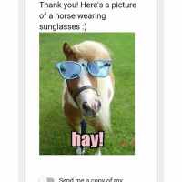 Quality meme from my ceramics  pre assessment: Thank you! Here's a picture  of a horse wearing  sunglasses  hay!  Send me a copy of mv Quality meme from my ceramics  pre assessment