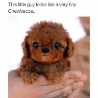 (@_kevinboner ): This little guy looks like a very tiny  Chewbacca (@_kevinboner )