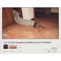 @cockmemesv2 dankmemes: Top 10 Most Dangerous Snakes Around The World  WatchMojo.com  D Subscribe 11,339 820  309,652  Add to  Share  More  6939 243 @cockmemesv2 dankmemes