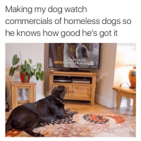 Dogs, Funny, and Homeless: Making my dog watch  commercials of homeless dogs so  he knows how good he's got it  Join A org  ASPCA 1.888.514 4443  C damn son 😂