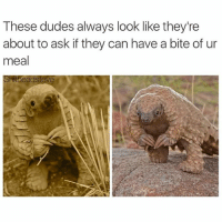 Dude, Funny, and True: These dudes always look like they're  about to ask if they can have a bite of ur  meal  eadsteve True... But what are those? I want.