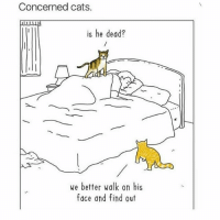 Via @drinksforgays: Concerned cats.  II LI  is he dead?  we better walk on his  face and find out Via @drinksforgays
