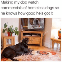 RESPECK😂😂💀 @illestcontent-➡️ TAG 5 FRIENDS-➡️ TURN ON POST NOTIFICATIONS: Making my dog watch  commercials of homeless dogs so  he knows how good he's got it  A org  ASPCA 1.888.514 44432S RESPECK😂😂💀 @illestcontent-➡️ TAG 5 FRIENDS-➡️ TURN ON POST NOTIFICATIONS