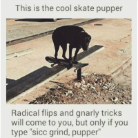 "sick grind, pupper.: This is the cool skate pupper  Radical flips and gnarly tricks  will come to you, but only if you  type ""sicc grind, pupper"" sick grind, pupper."